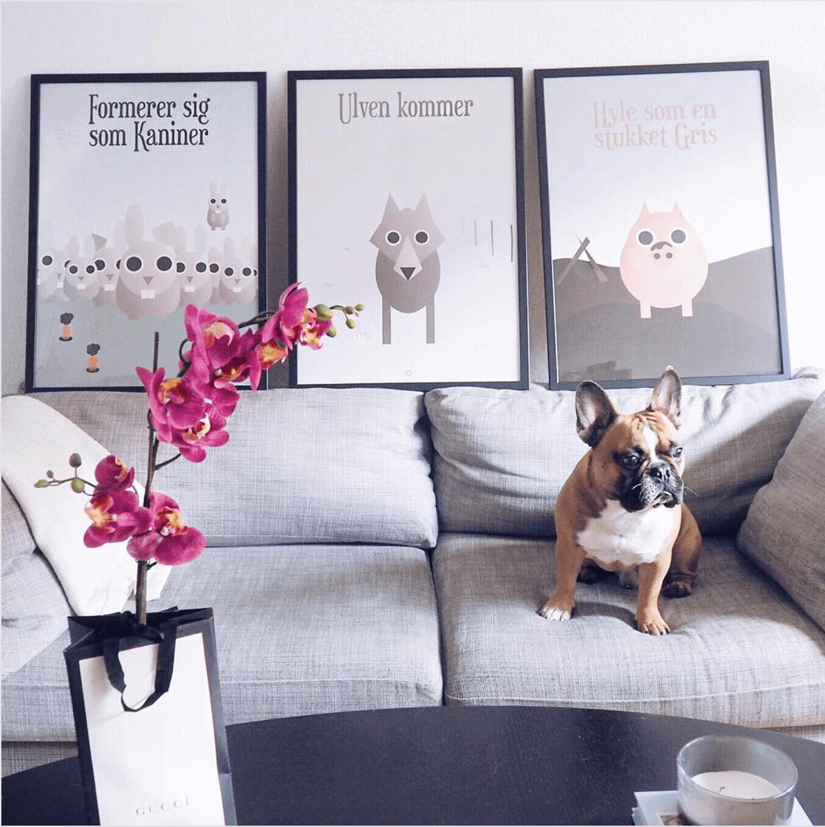 plakater i stuen med sjove ordsprog med dyr