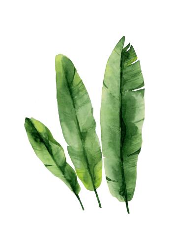 plante plakat med grønne bananblade tropisk