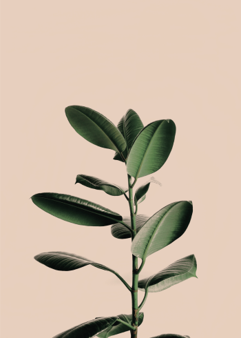 plante plakat med fine grønne blade
