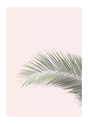 botanisk plakat med billede af palmeblade med lyserød baggrund