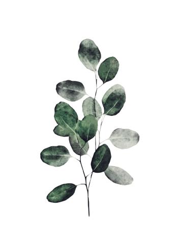 kunstplakat af grøn Eukalyptus gren til hjemmet
