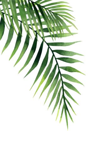 plakat med et grønt palmeblad og hvid baggrund