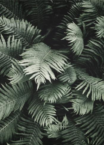 botaniske plakater med tropiske blade af en bregne
