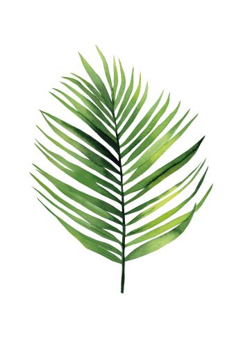 plante plakat med bregne blad. flotte plakate med botanik