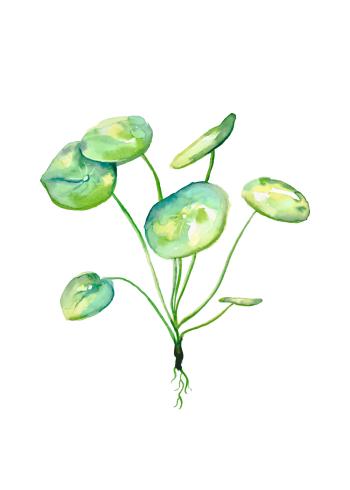Plakat af pilea plante i flotte grønne farver