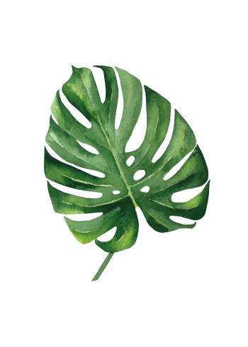 plante plakat med monstera blad