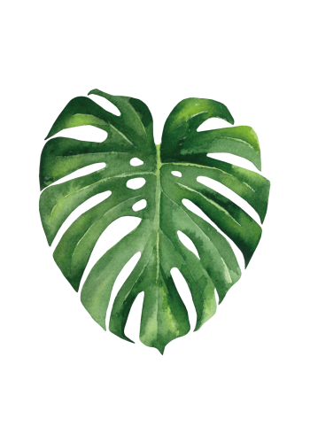 plakat med grøn monstera Fingerphilodendron blad
