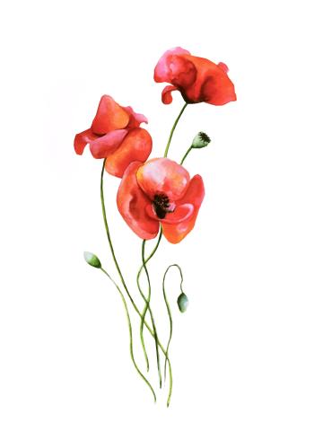 fin retro plakat med valmue blomster i røde farver