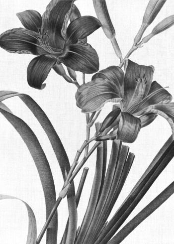 Retro plante plakat med sorte liljer