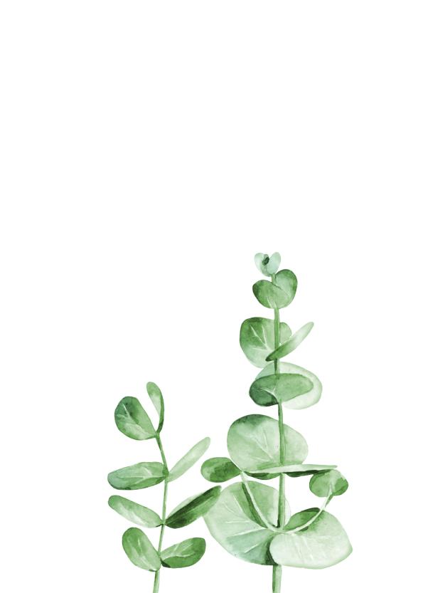 botaniske plakater med grøn plante til hjemmet
