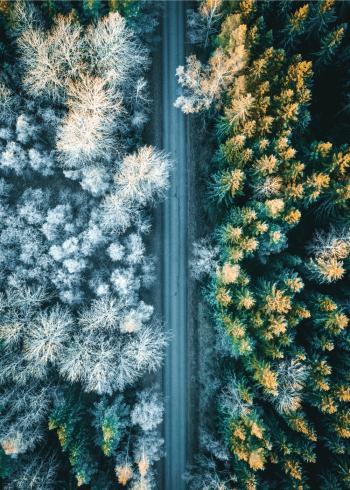 fotoplakat af en smuk frost morgen i naturen med vejen der skiller træerne