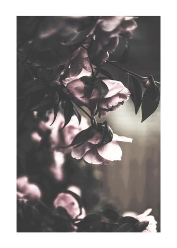botaniske plakater blomster