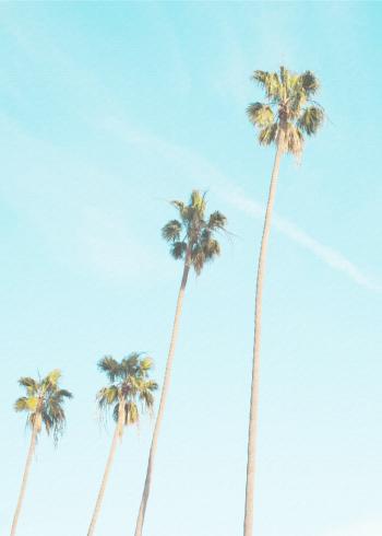 fotoplakat af eksotiske palmer med blå himmel