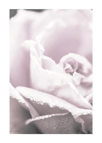romantiske plakater med lyserøde roser