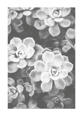 succulent plakat med smukke blomster