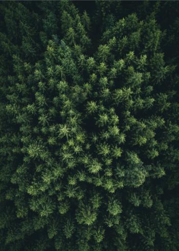 fotoplakat af den grønne skov taget med drone