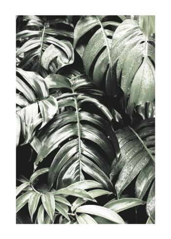 tropiske plakater med monstera planten