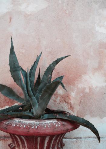fotoplakat af kaktus i eksotiske omgivelser