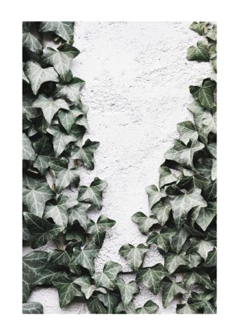 egeføj blade plakat i grønne farver