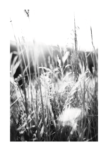 natur plakat med græsstrå og korn