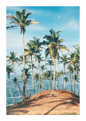 fotokunst plakater med palmer på bakke
