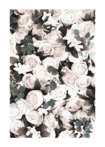 plakat med roser