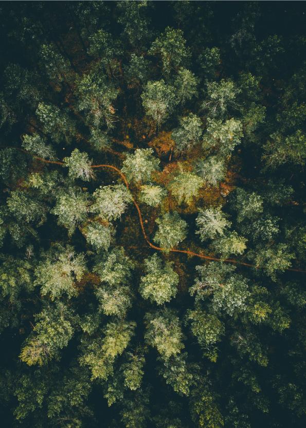 fotoplakat af nordisk skov med grantræer