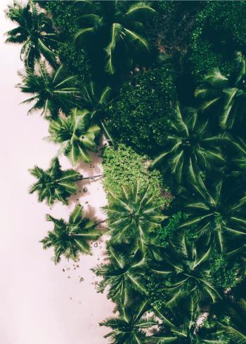 fotoplakat af smukke grønne palmer på eksotisk strand