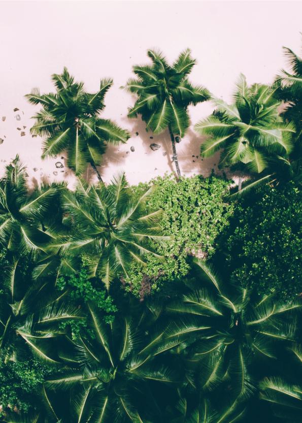 Fotoplakat af smukke grønne palmer på strand