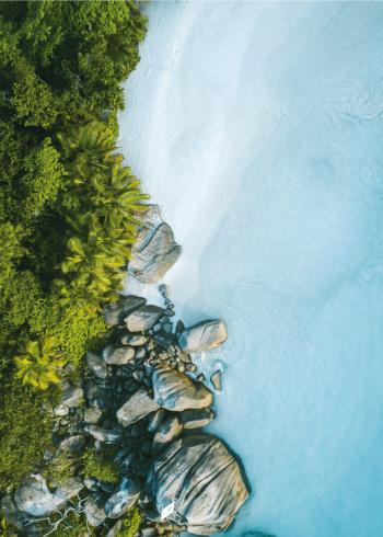 fotoplakat af tropisk strand med grønne palmer