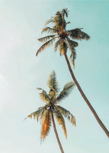 flot plakat af to palmer med blå himmel