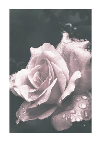 plakat med rose i feminine farver