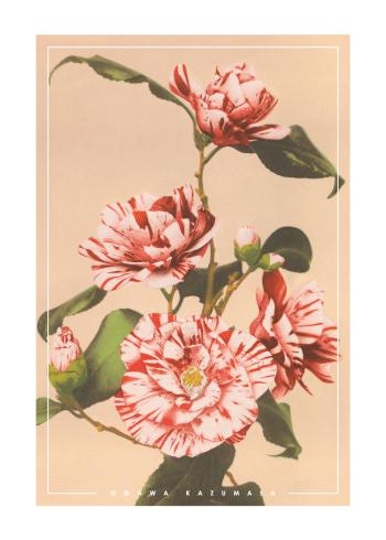 japanske fotokunst plakater med røde camellias