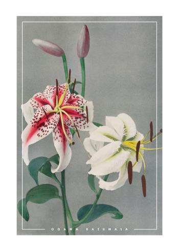 japanske fotokunst plakater med hvide liljer