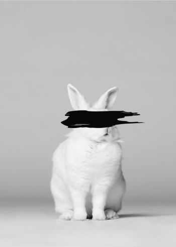 fotobillede af hvid kanin med sort for øjnene