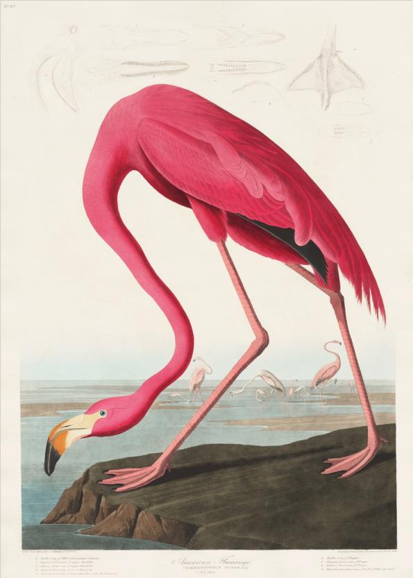 plakater med flamingoer