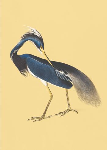 japanske fugle i gule farver