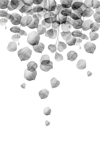 plante plakat med eukalyptus der hænger