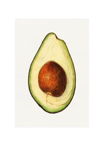 avocado plakat i retro stil
