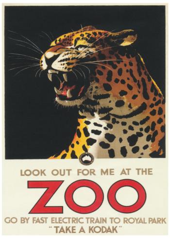 zoo plakater med leoparder