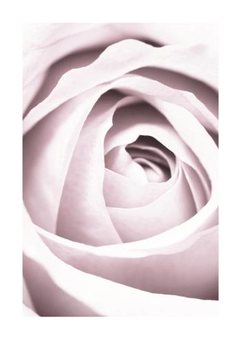 rose plakat til stuen