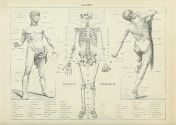 Fysiologi plakat med kroppen og skelettet