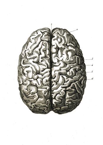 Anatomi plakat med hjernen