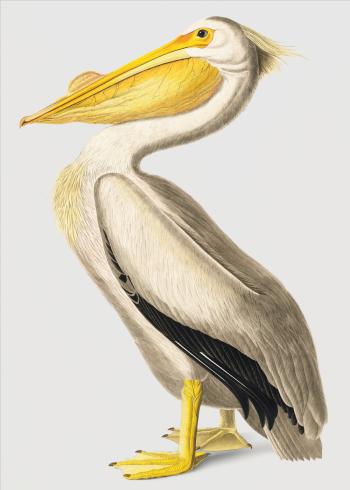 pelikan fugl i japansk design