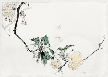 japanske kunst plakater med hvide blomster