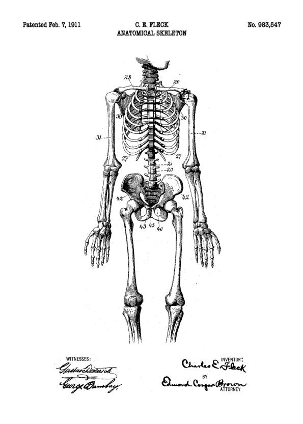 plakater med originale patent tegninger af anatomi skellet
