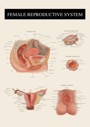 anatomi plakat af kvindens vagina