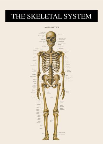 plakater med skelettet