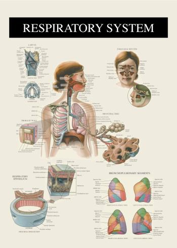 plakat med åndedræt og lunger