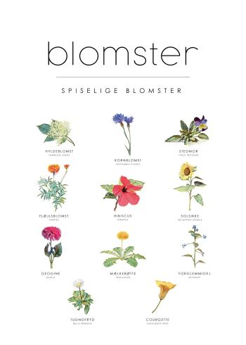 spiselige blomster plakat guide